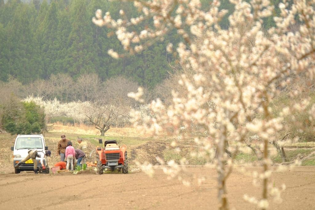 木の里農園の歩み
